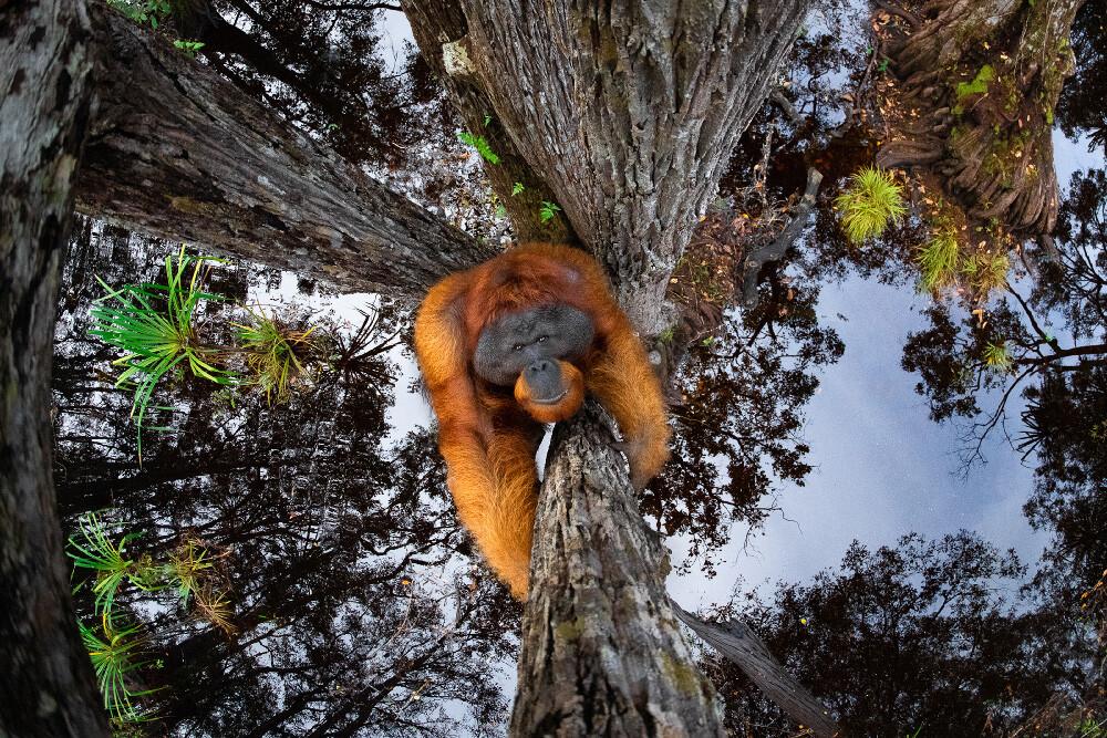 Las fotografías de naturaleza y vida salvaje ganadoras del Nature TTL Photographer of the Year 2021_Revista Contrastes